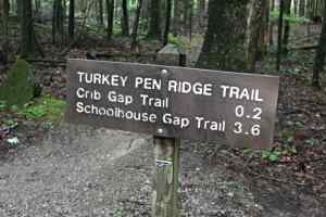 Kid Friendly Smokies, Turkeypen Trail, Mom Explores The Smokies