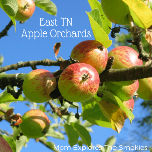 Knoxville, Sevierville, and East Tennessee Apple Orchards, Mom Explores The Smokies