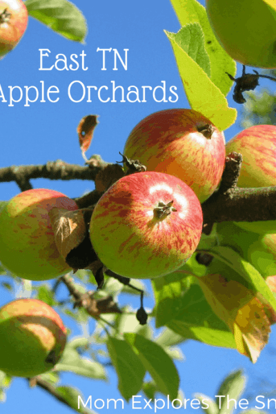 Apple Orchards in Knoxville and East Tennessee
