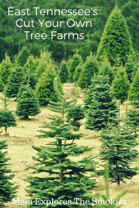 Cut Your Own Christmas Trees in East TN