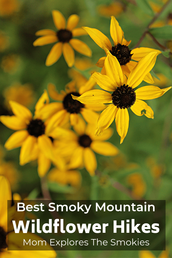 Best Smoky Mountain Wildflower Hikes in Tennessee, USA