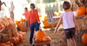 Pumpkin Patches Near Johnson City TN, Kingsport TN, Bristol TN, and Beyond!