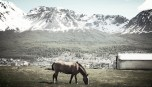 Horse grazing with mountain view in Ushuaia