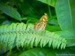 Aruba and butterflies were a nice match