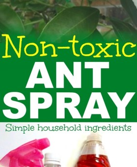 DIY Natural Ant Repellent Spray