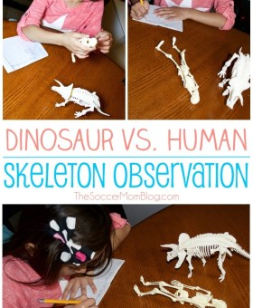 Dinosaur & Human Skeleton Observation Activity