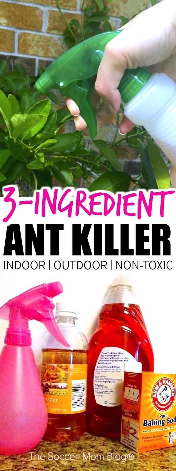 The Best Homemade Ant Killer (Kid & Pet Safe) - The Soccer ...