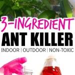 The Best Homemade Ant Killer (Kid & Pet Safe)