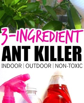 The Best Homemade Ant Killer (Kid & Pet Safe)