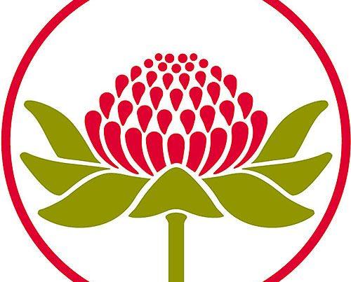 bush flower fiori australiani