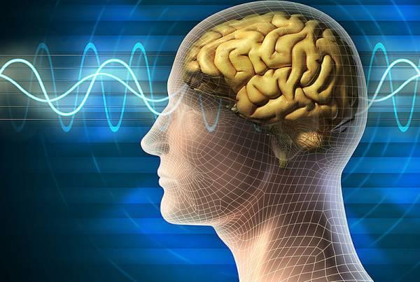 corso-funzioni-cervello