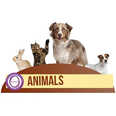 thesolarlogos-monica-righi-theta-healing-corso-animali-animals