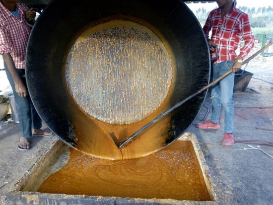 Fresh liquid jaggery being moved to a tray