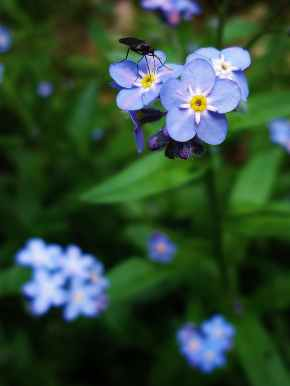 nature flowers blue flower