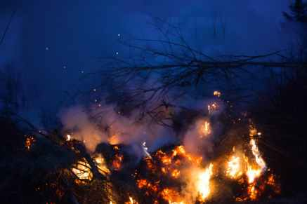 fire burning among branches of trees in forest