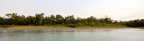 The forest of Sunderbans