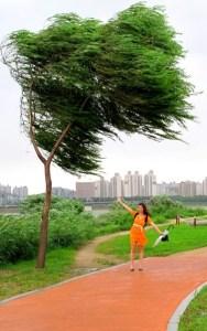 Typhoon, Seoul, Korea