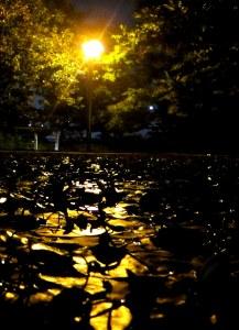 Seonyudo Island at Night
