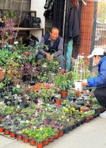 Jongno Flower Market Alley, Seoul, Korea