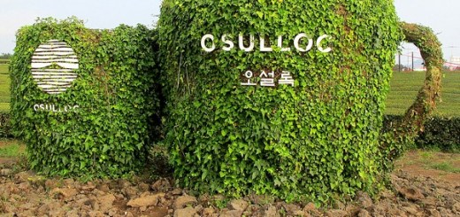 Jeju, Korea: O'Sulloc Green Tea Fields