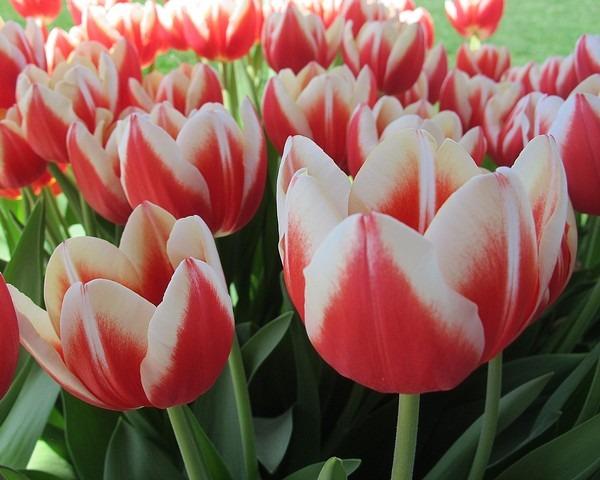 Spring Flowers: Ohio