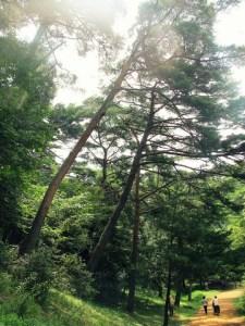 Taean-gun: Anmyeondo Recreational Forest