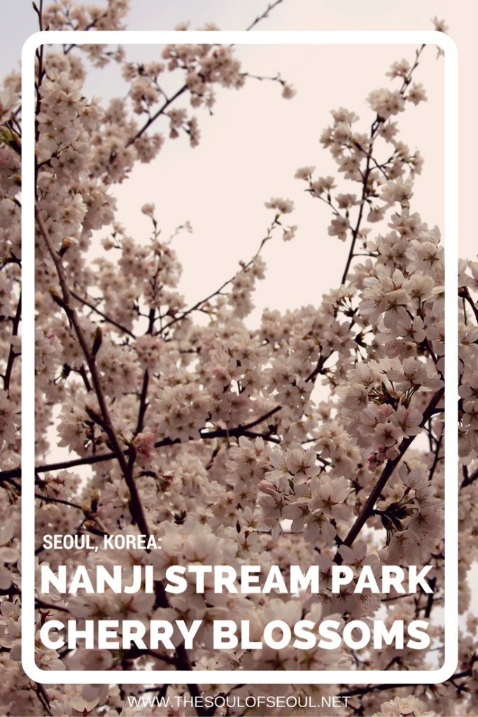 Nanji Stream Park Has Cherry Blossoms Too! Namsan Mountain, Yeouido and other IT spots for cherry blossoms abound, but parks like Nanji Stream Park also have beautiful spring flowers in bloom. where to see flowers in Seoul in the spring. Off the beaten path.