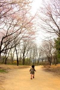 Nanji Stream Park, World Cup Park, Seoul, Korea, Cherry Blossoms