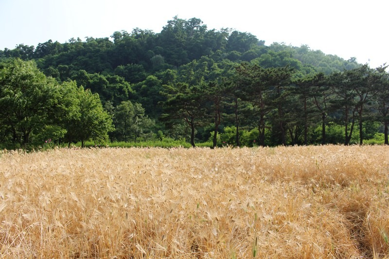 Nanji Stream Park, Mapo-gu, Seoul, Korea