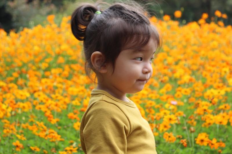 Nanji Stream Park, World Cup Park, Mapo-gu, Seoul, Korea: Baby in a Cosmos Field