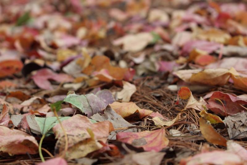 Nanji Stream Park, Mapo-gu, Seoul, Korea: fall leaves
