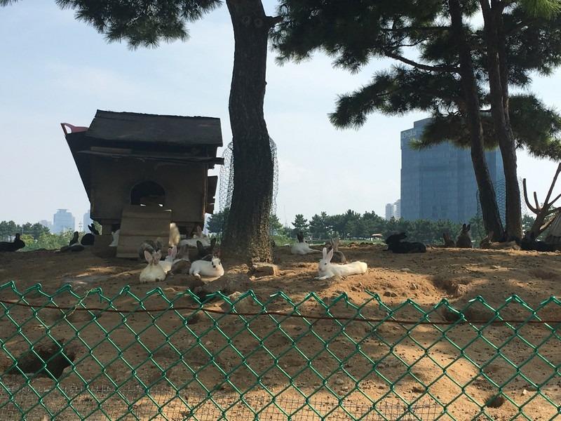Songdo Central Park, Incheon, Korea
