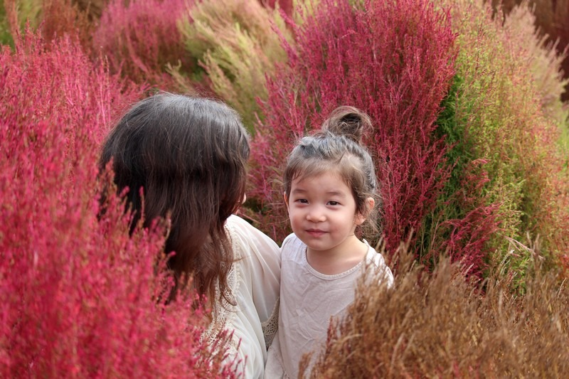 Nari Park, Yangju, Korea: Autumn Flowers, Hallie Bradley and daughter