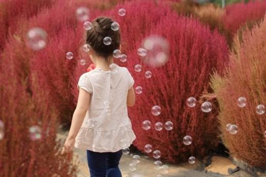Nari Park, Yangju, Korea: baby and autumn flowers