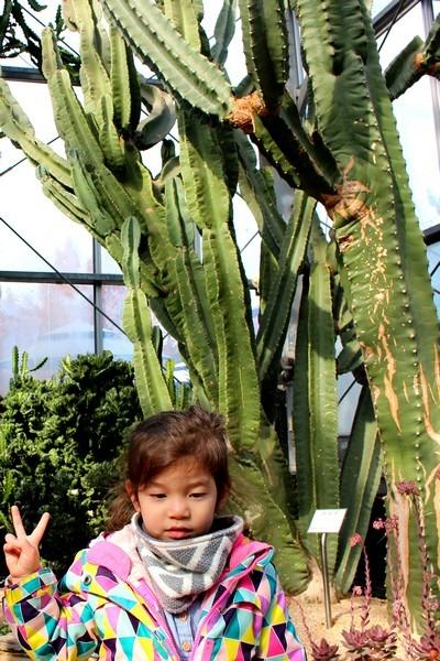 Cactus Greenhouse, Ilsan, Korea