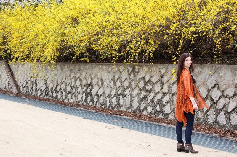 Worldcup Park, Forsythia Lane, Seoul, Korea: Hallie Bradley