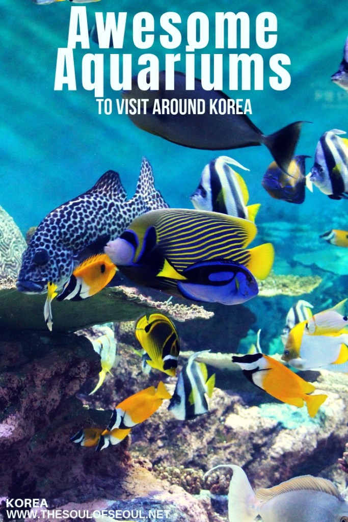 Awesome Aquariums to Visit Around Korea: Aquariums can be fun for everyone especially those little kids in tow. Check out these must-see aquariums around South Korea. From Seoul to Busan and even on Jeju too, there is an aquarium to be found.