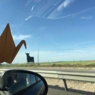 Día 129 - Grulla picotea toro