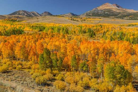 Art of Transit, sort of: Fall colors earlier this month along U.S. 395 near Conway Summit. Photo by Fred Moore, via Flickr creative commons.