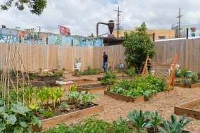 Community garden.