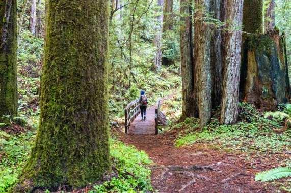 Redwoods in Van Damme State Park. Photos courtesy Steve Hymon.