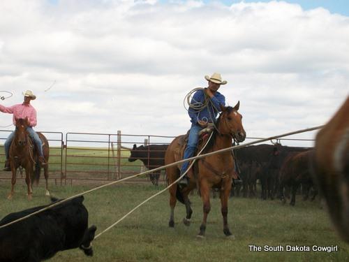 Zach dragging a calf on DX Iam Nuked (Dozer)
