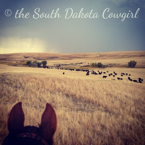 western lifestyle, horse photography, equine photographer, south dakota equine photographer, south dakota photography, ranching, ranch life photography