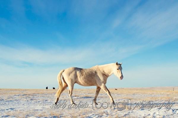 South Dakota Cowgirl Photography, equine photography, Jenn Zeller