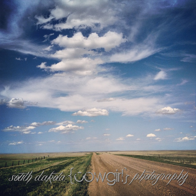 south dakota cowgirl photography, palomino horse, iphone photo