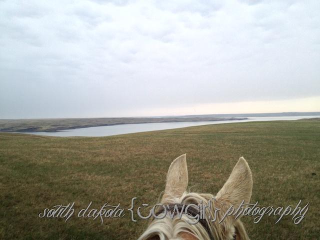 south dakota cowgirl photography, palomino horse, iphone photo, missouri river