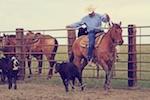 branding, south dakota cowgirl photography, ranching, ranchlife