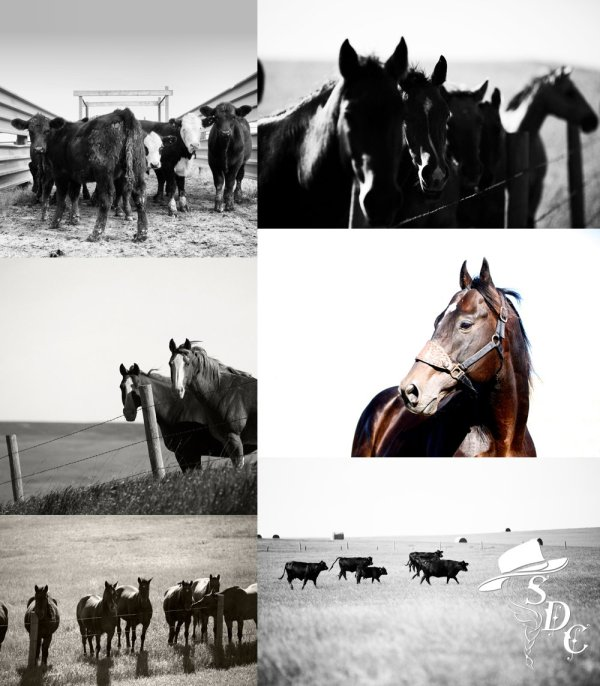 South dakota cowgirl photography, the south dakota cowgirl, south dakota equine photographers, south dakota horses, horses in south dakota, black and white photography