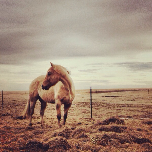 south dakota cowgirl photography, instagram, photography, south dakota landscapes, horses
