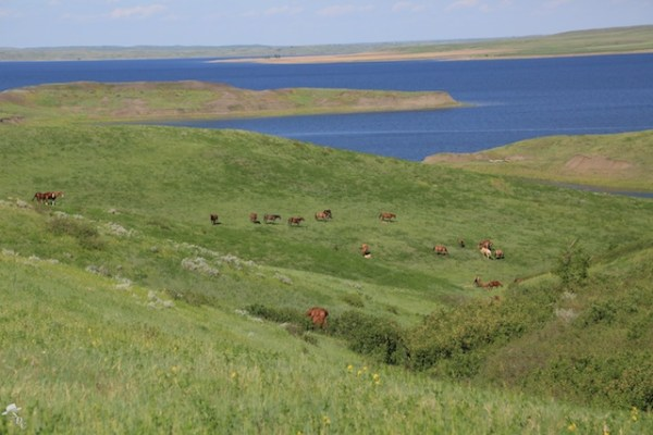 horses in a natural setting, the missouri river, south dakota, south dakota horses, ranch horses, south dakota cowgirl photography